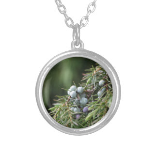 Juniperus berries on a tree silver plated necklace