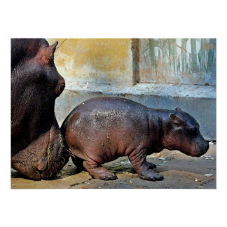 Just A Little Nudge Hippopotamus Portrait Poster