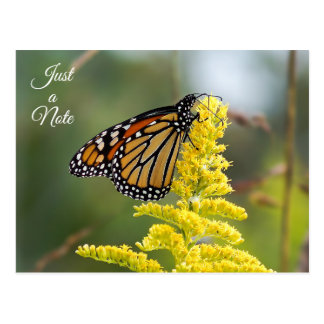 Just a Note Monarch Butterfly Postcard