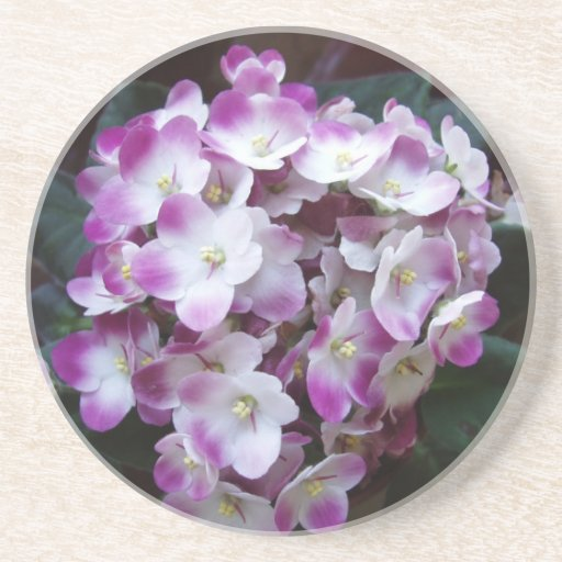 Just an Awesome Flower Drink Coasters