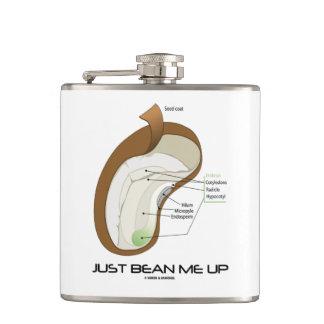 Just Bean Me Up Dicotyledon Bean Seed Humor Hip Flask