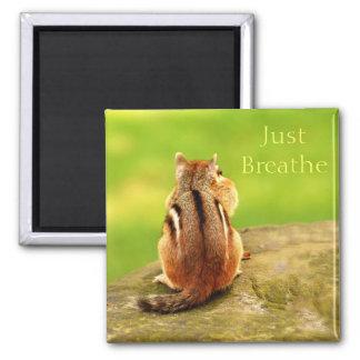Just Breathe Chipmunk Magnet