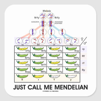 Just Call Me Mendelian (Punnett Square Genetics) Square Sticker