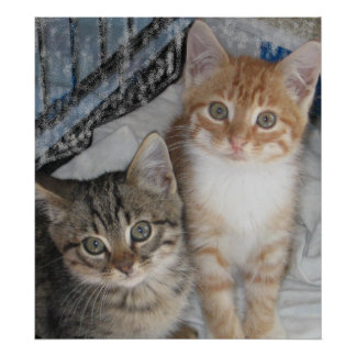 Just Kittens Poster