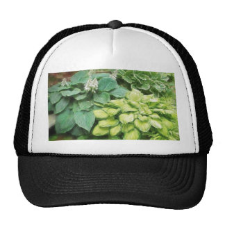 Just One More Hosta! Hat