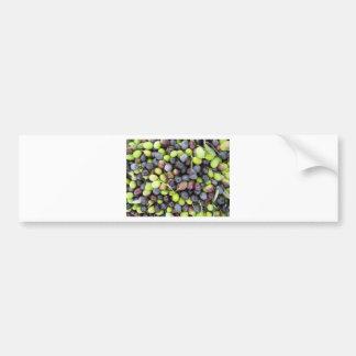 Just picked olives background during harvest time bumper sticker
