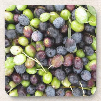 Just picked olives background during harvest time coaster