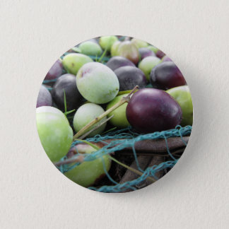 Just picked olives on the net during harvest time 6 cm round badge