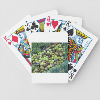 Just picked olives on the net during harvest time bicycle playing cards