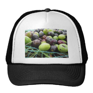 Just picked olives on the net during harvest time cap