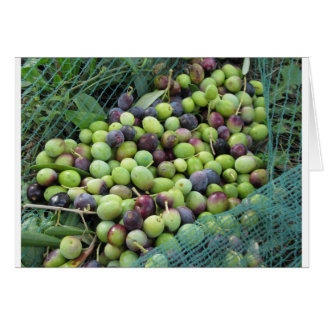 Just picked olives on the net during harvest time card