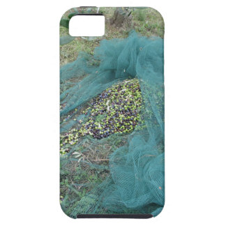 Just picked olives on the net during harvest time case for the iPhone 5
