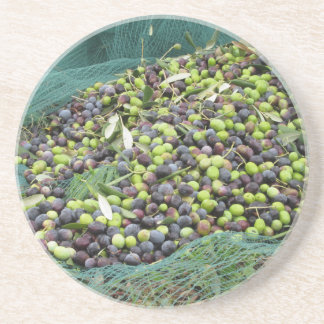 Just picked olives on the net during harvest time coaster