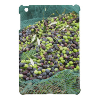 Just picked olives on the net during harvest time cover for the iPad mini