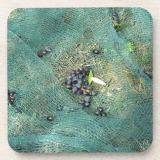 Just picked olives on the net during harvest time drink coasters