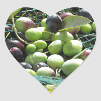 Just picked olives on the net during harvest time heart sticker