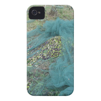 Just picked olives on the net during harvest time iPhone 4 cases