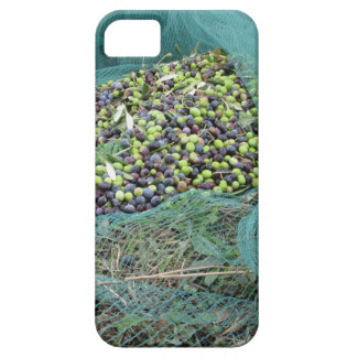 Just picked olives on the net during harvest time iPhone 5 case