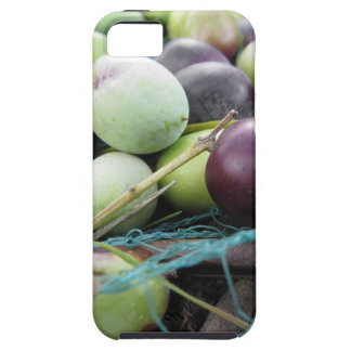 Just picked olives on the net during harvest time iPhone 5 cover