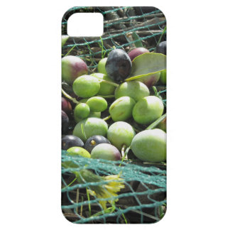 Just picked olives on the net during harvest time iPhone 5 covers