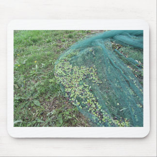 Just picked olives on the net during harvest time mouse pad