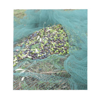 Just picked olives on the net during harvest time notepad