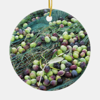 Just picked olives on the net during harvest time round ceramic decoration