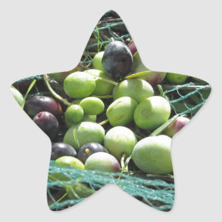 Just picked olives on the net during harvest time star sticker