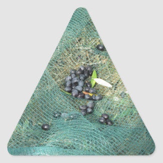 Just picked olives on the net during harvest time triangle sticker