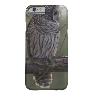Juvenile Barred Owl (Strix varia) 2 Barely There iPhone 6 Case