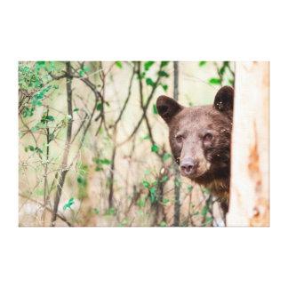 Juvenile Black Bear Portrait, Missoula, Montana Stretched Canvas Prints