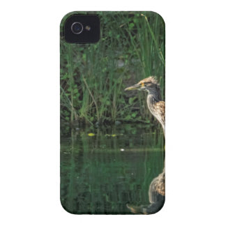 Juvenile Black Crowned Night Heron iPhone 4 Covers