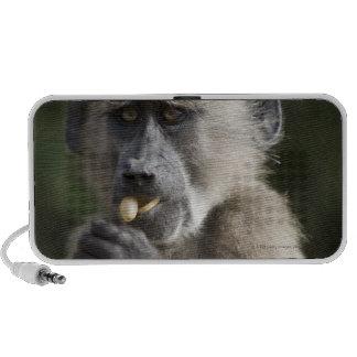 Juvenile Chacma baboon (Papio ursinus) eats nuts Travel Speaker