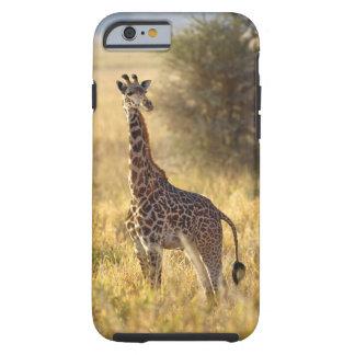Juvenile Giraffe, Giraffa camelopardalis 2 Tough iPhone 6 Case