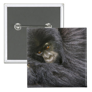 Juvenile Mountain Gorilla 3 15 Cm Square Badge