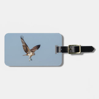 Juvenile Osprey in flight Luggage Tag
