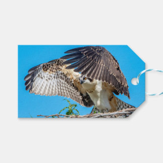Juvenile Osprey in the nest Gift Tags