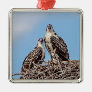 Juvenile Osprey in the nest Silver-Colored Square Decoration