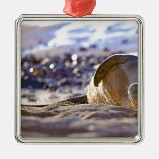 Kaimana Mug C310BECF-6742-4AB9-A670-07E3CFD639B5 Metal Ornament