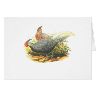 Kalij Pheasant Card