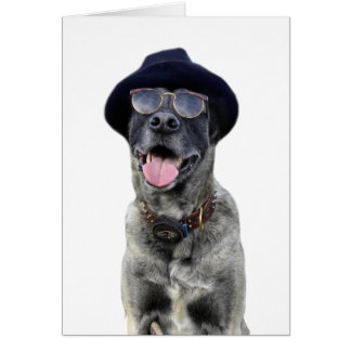 kangal hund mit hut und brille grußkarte