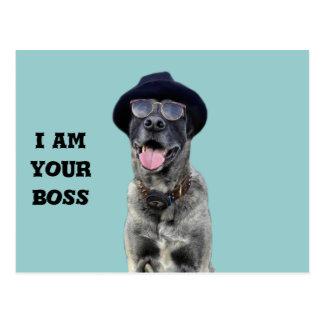 kangal hund mit hut und brille postkarten