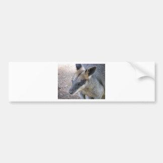 Kangaroo Car Bumper Sticker