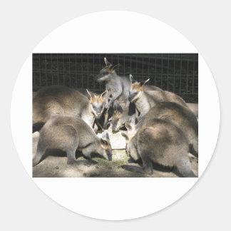 Kangaroo Circle Round Sticker