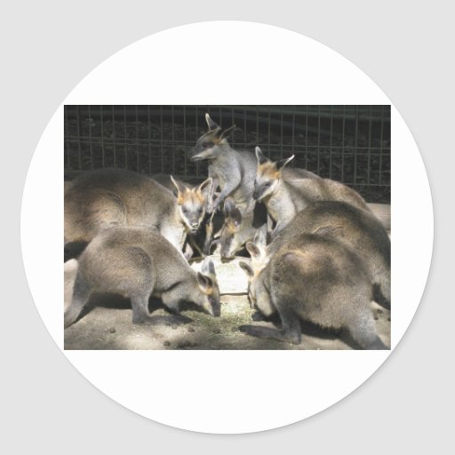 Kangaroo Circle Round Stickers