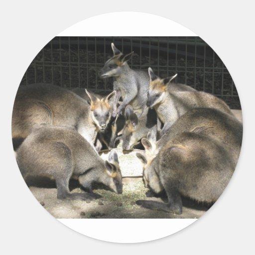 Kangaroo Circle Stickers