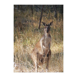 Kangaroo in the Bush Canvas Print