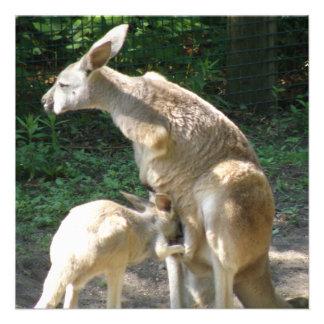 Kangaroo Joey  Invitations