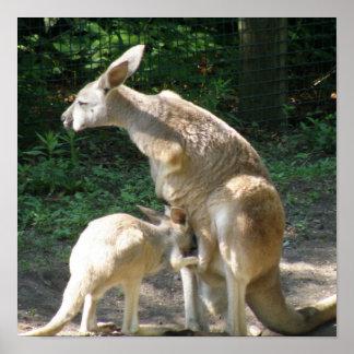Kangaroo Joey  Poster