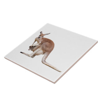 Kangaroo Large Square Tile